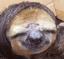 Hearthstone - last post by Sloth
